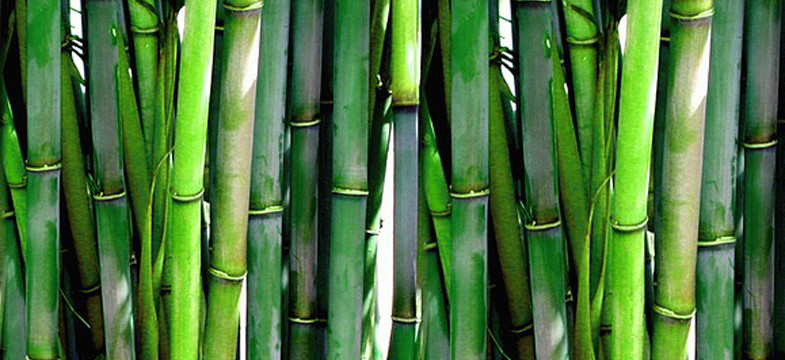Yogamatte Bambus Dr Schweikart